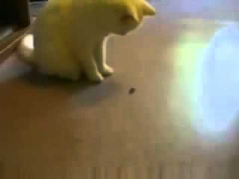 【猫大パニック】ゴッ、ゴキブリが手に~!!!ガッシャーン!