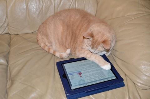 猫とタブレット