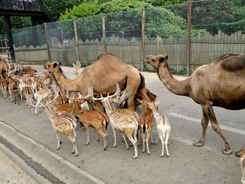 動物の行列