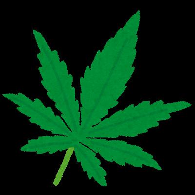 薬品や麻薬の原料にもなる、麻(大麻・マリファナ)の葉っぱ
