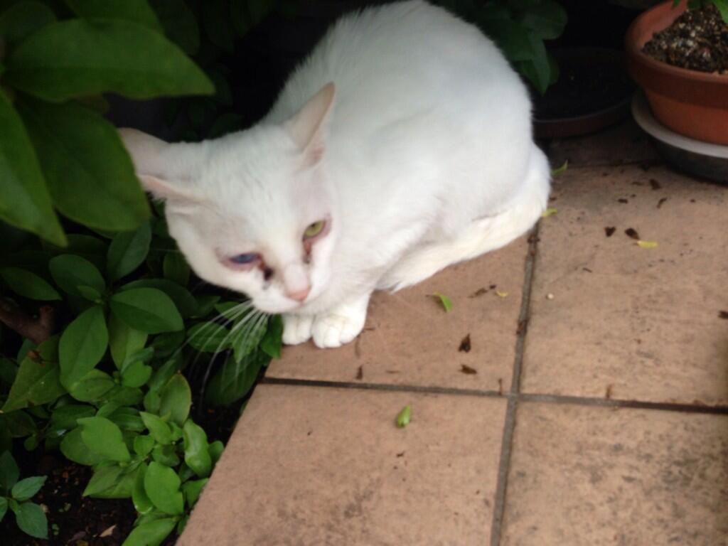 蓮舫の猫が目を開けない