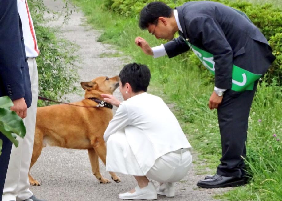 蓮舫、犬にも嫌われる!自分は戸籍隠すのに犬は登録鑑札の取付が義務付けられて不公平だワン