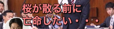小西洋之議員、総理に「桜の花から散り際の潔さを学んで」散るどころか根から腐って倒れた民進党が言う?