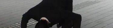 元KAT-TUN 田口淳之介が保釈、歌舞伎みたいな謝罪と土下座にファンもドン引き!警察に小嶺麗奈を売ったことがバレてないとでも思っているのか?
