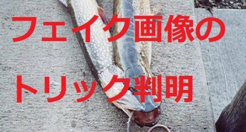 風評被害煽る放射能デマ「放射能で奇形魚、回転寿司が買っている」→海外のフェイク画像とバレて謝罪
